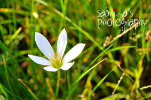 sabby photography by sab5424
