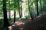 Forest 6 by Janine-Autumn