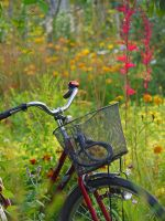 summer bike.,. by burcyna