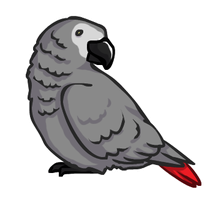 African Grey Parrot by le-Requin