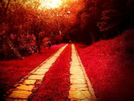 This Reddish Grass by think0