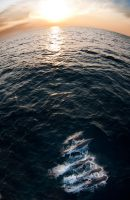 Dolphin Sunset by leighd