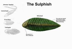 REP: The Sulphish by Ramul