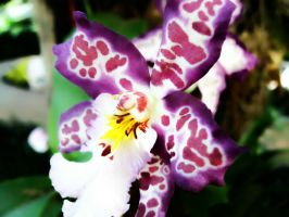 Spotted Orchid by Salena99