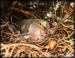 Turtle Dove by KYghost