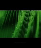 dancing in the rain-revised by polisitidur