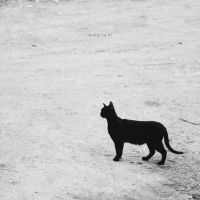 Black cat by odpium