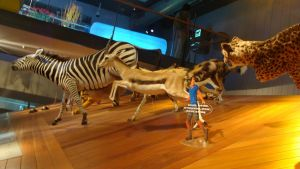 BC naturalis- African animals by Lot1rthylacine