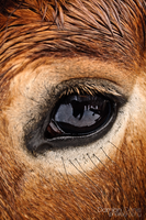 Horse eye by DoubbleD