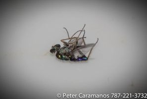 Cropped dead insect by Caramanos2000