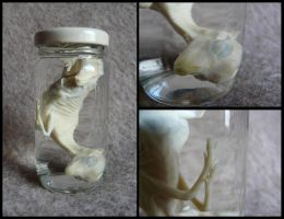 Wet Specimen: Roe Deer Fetus by CabinetCuriosities
