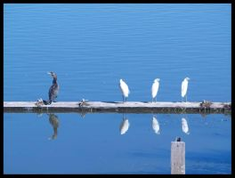 Bird Reflections by jdurbin
