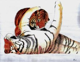 tigers playing by Lenval