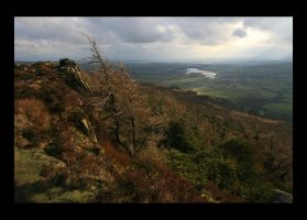 The Roaches by danUK86
