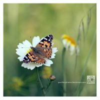 Painted Lady by Garelito-Photos