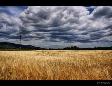 Fields of Gold by Stevie73