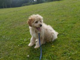 Marlowe at the Park by Party9999999