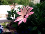 Flower by Avarquare