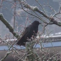 crow 1 by sacral-stock