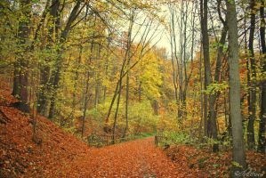 Days Of Autumn XIII by Ibilicious