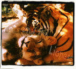 Tiger and the Lioness by MrForien