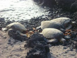 Tortugas by nikiparker
