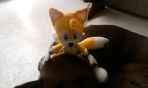 Tails riding a dog 4 by chi171812