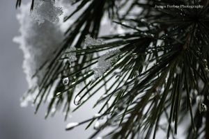 Snow, Drops, and Pine Needles by JForbes1701