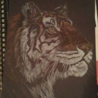 Colored Pencil Tiger by mudnoseandleafstorm