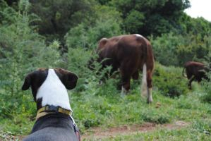 Dog ,Cow ,Nature by AngelicPicture