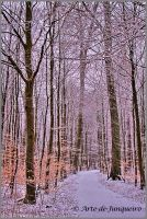 Late Winter Trees by Arte-de-Junqueiro