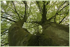 Fagus Look-Up by AranwA-Tari