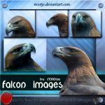 Falcon set of 5 png's by M10tje