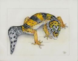 leopard gecko by winstonscreator