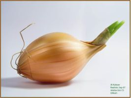 Onion by Al-Kabeer