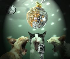 Imagine if..the cats sing by stevengico
