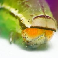 Caterpillar by RobbyP
