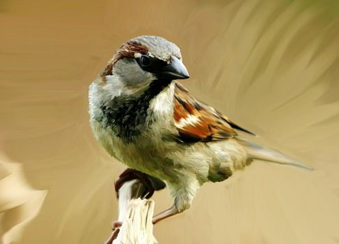 Sparrow 2 by Mz-S