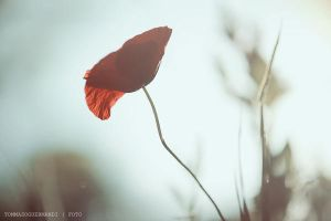 Luce by tgphotographer