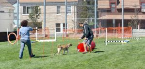 2014 Dog Festival, Try It Dog Obstacles 7 by Miss-Tbones