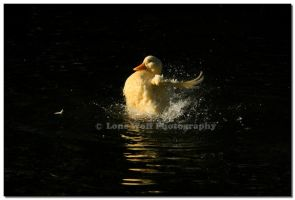 Little Rubber Duckie by LoneWolfPhotography