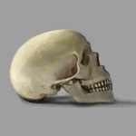 Skull Study 2 by AlanTheRobot