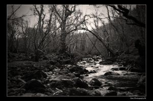 Forests of Aber by Crutchley29
