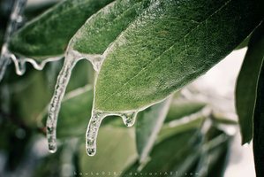 Icy Green by AJPastor