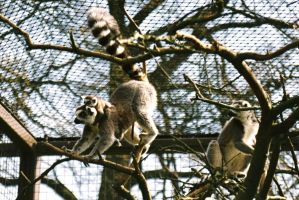 Cotswold Wildlife Park IV by aragornsgirl333