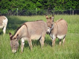 Donkeys II by hyperetic