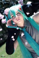 VOCALOID - Cherry Blossom by BlackIcePearl