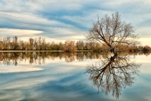 reflecting nature by YouMan