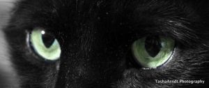 Green Cat Eyes by tasha-killer-coma