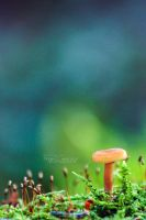 Toadstool by FreyaPhotos